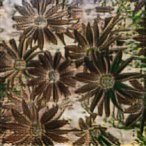 An example of the gross brown flowers