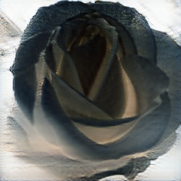 Cool black rose